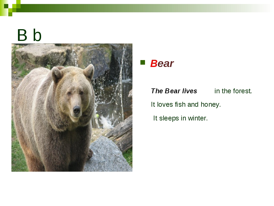 B b Bear The Bear lives in the forest. It loves fish аnd honey. It sleeps in...