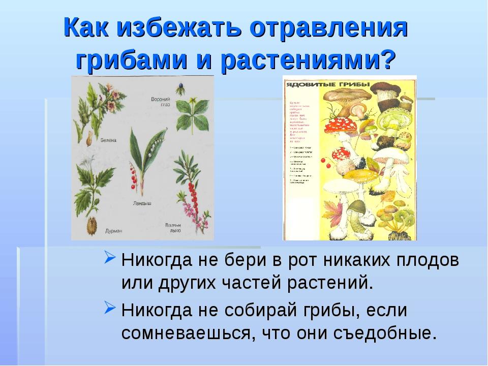 Как избежать отравления грибами и растениями? Никогда не бери в рот никаких п...