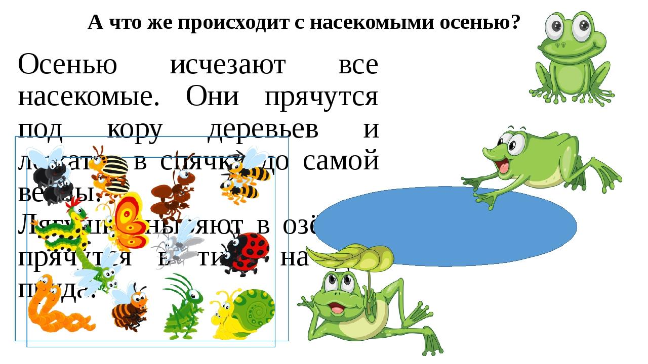 А что же происходит с насекомыми осенью? Осенью исчезают все насекомые. Они п...