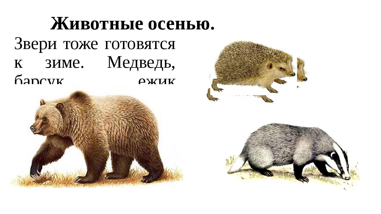 Животные осенью. Звери тоже готовятся к зиме. Медведь, барсук, ежик нагуливаю...
