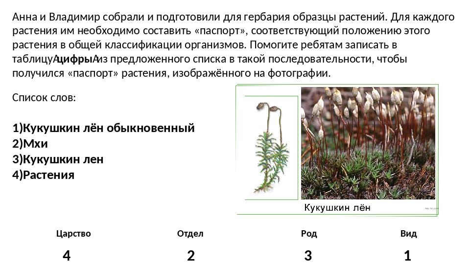 Анна и Владимир собрали и подготовили для гербария образцы растений. Для кажд...