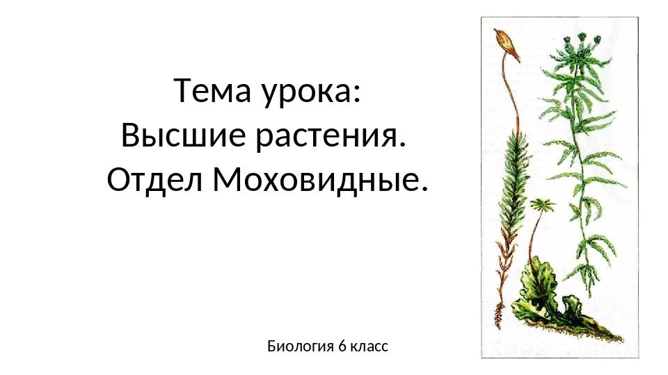 Тема урока: Высшие растения. Отдел Моховидные. Биология 6 класс