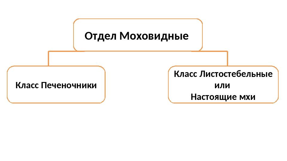 Отдел Моховидные Класс Печеночники Класс Листостебельные или Настоящие мхи