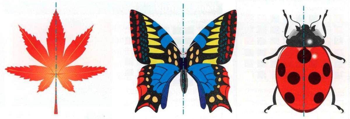 картины, осевая симметрия в природе картинки примеры пусть это утверждение