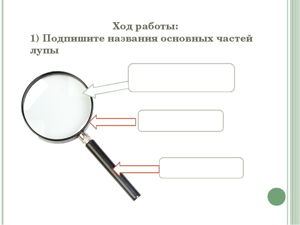 Ход работы: 1) Подпишите названия основных частей лупы