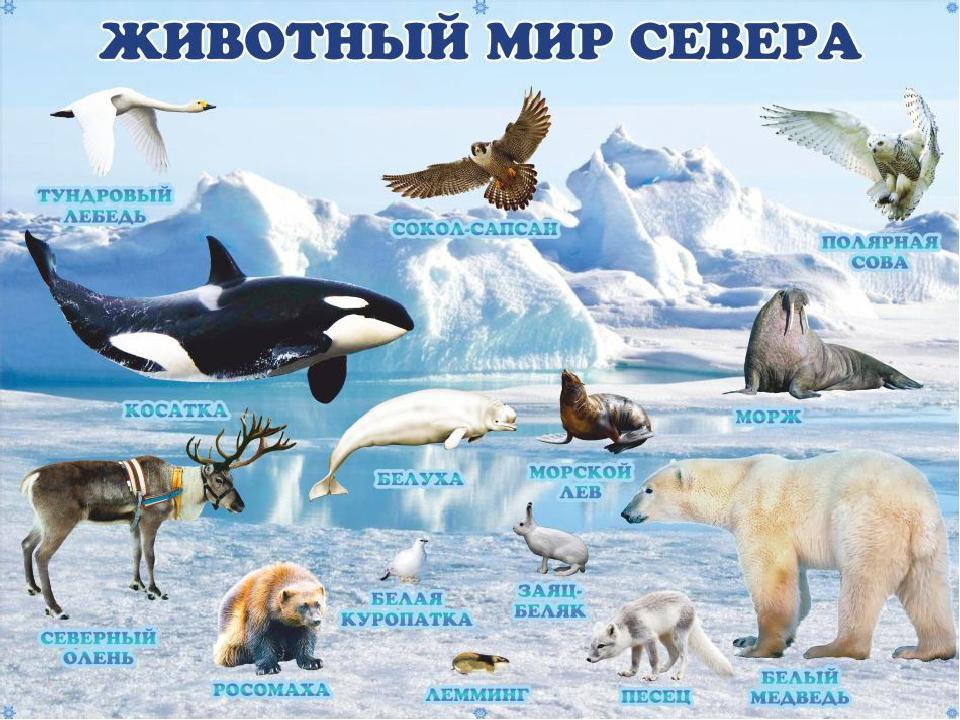 первый подарок, животные антарктиды фото с названиями и описанием очень нравится