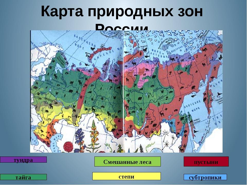 фирмы, природный зоны россии игра эммы