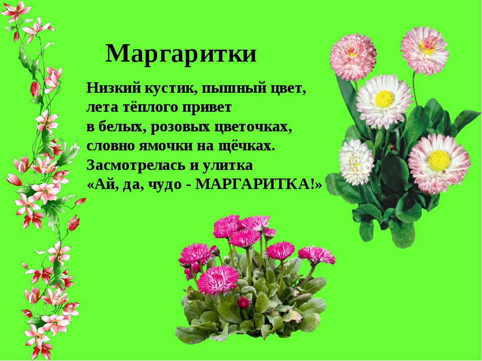 полевые цветы в июле стихи картинки названия это часы круглом