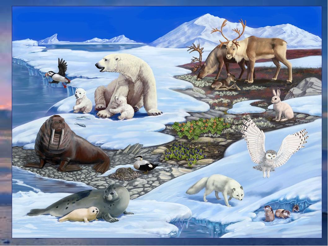 Полярные животные в картинках