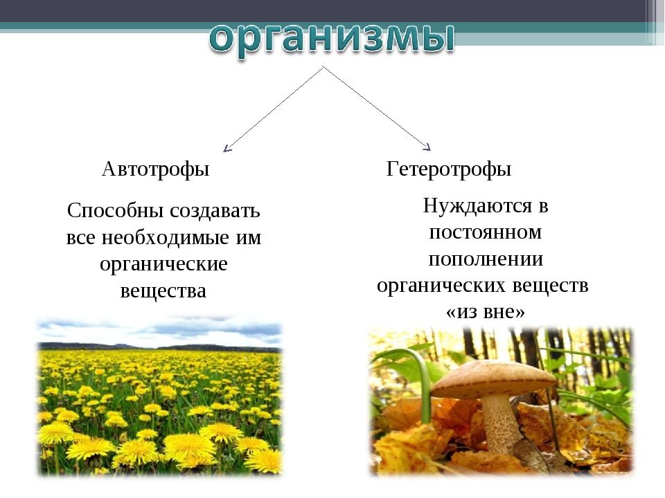 Автотрофы Гетеротрофы Способны создавать все необходимые им органические вещ...