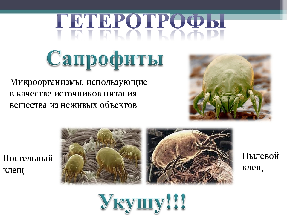 Микроорганизмы, использующие в качестве источников питания вещества из неживы...