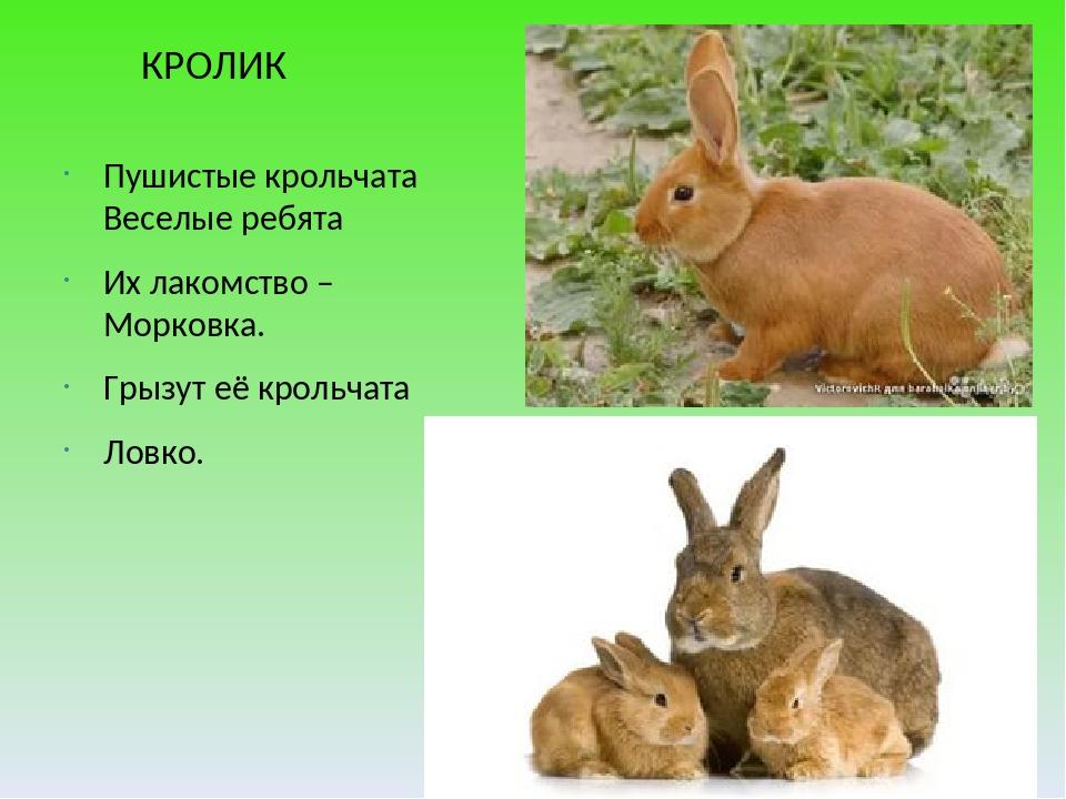 КРОЛИК Пушистые крольчата Веселые ребята Их лакомство – Морковка. Грызут её...