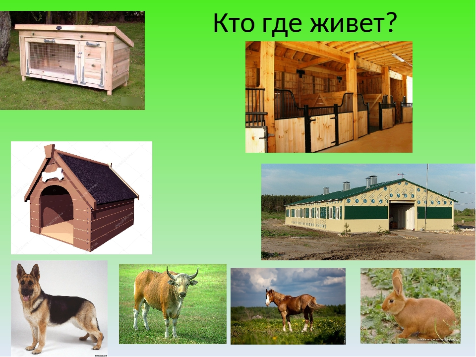 Кто где живет?