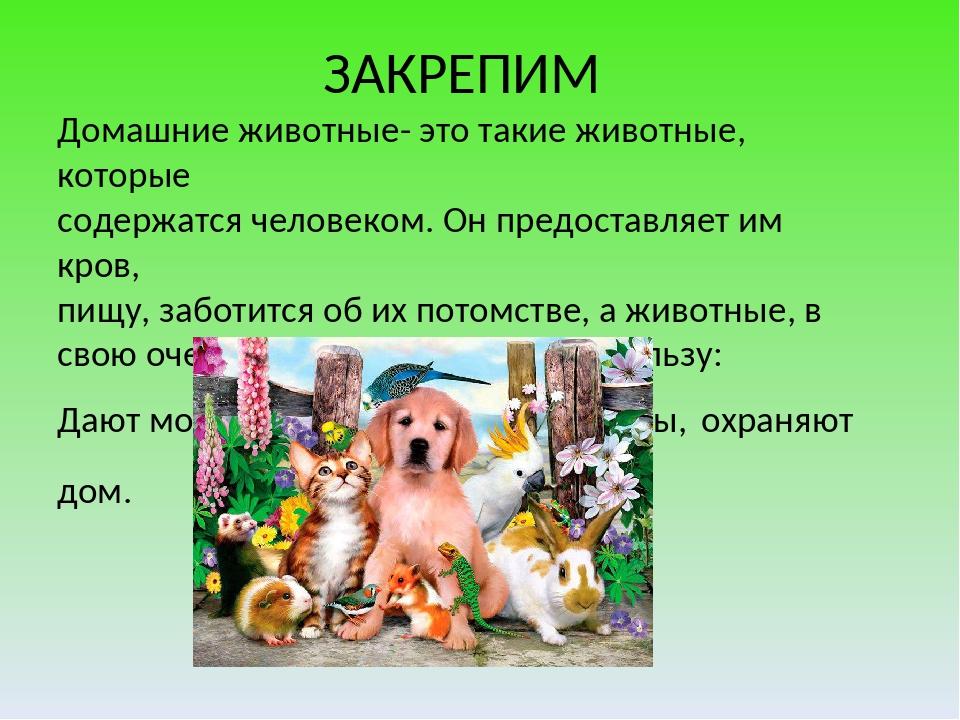 ЗАКРЕПИМ Домашние животные- это такие животные, которые содержатся человеком...