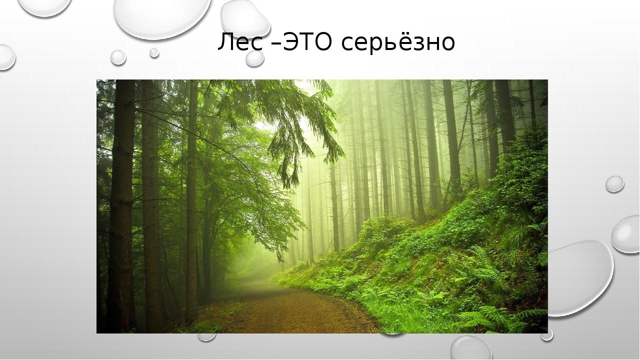Лес –ЭТО серьёзно