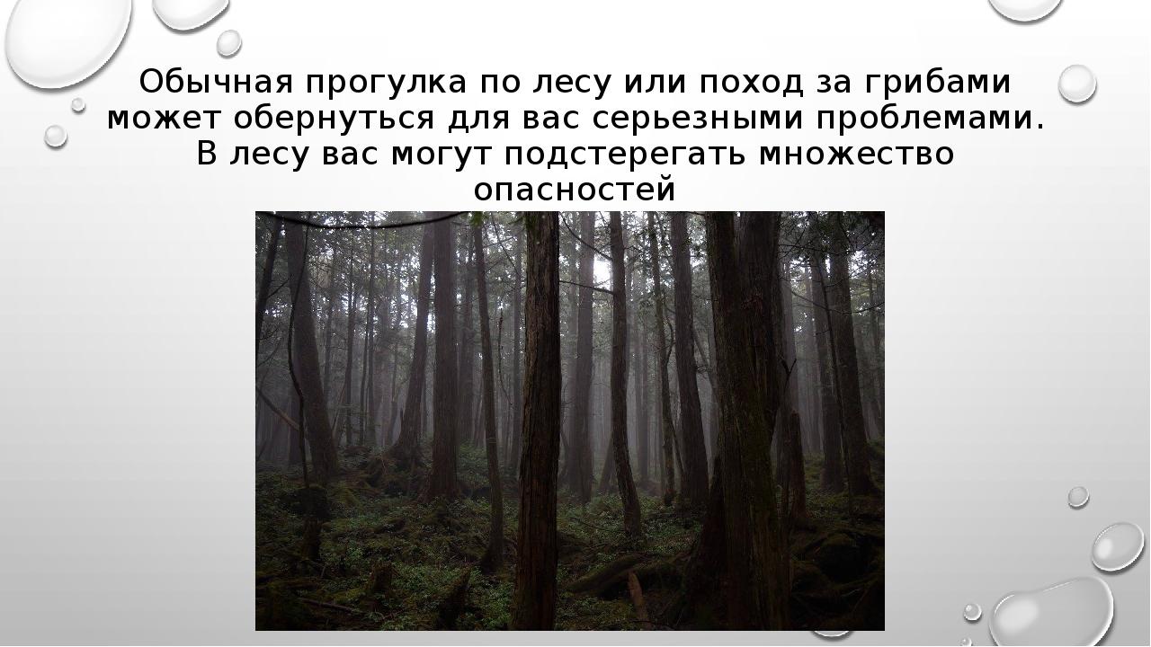Обычная прогулка по лесу или поход за грибами может обернуться для вас серьез...