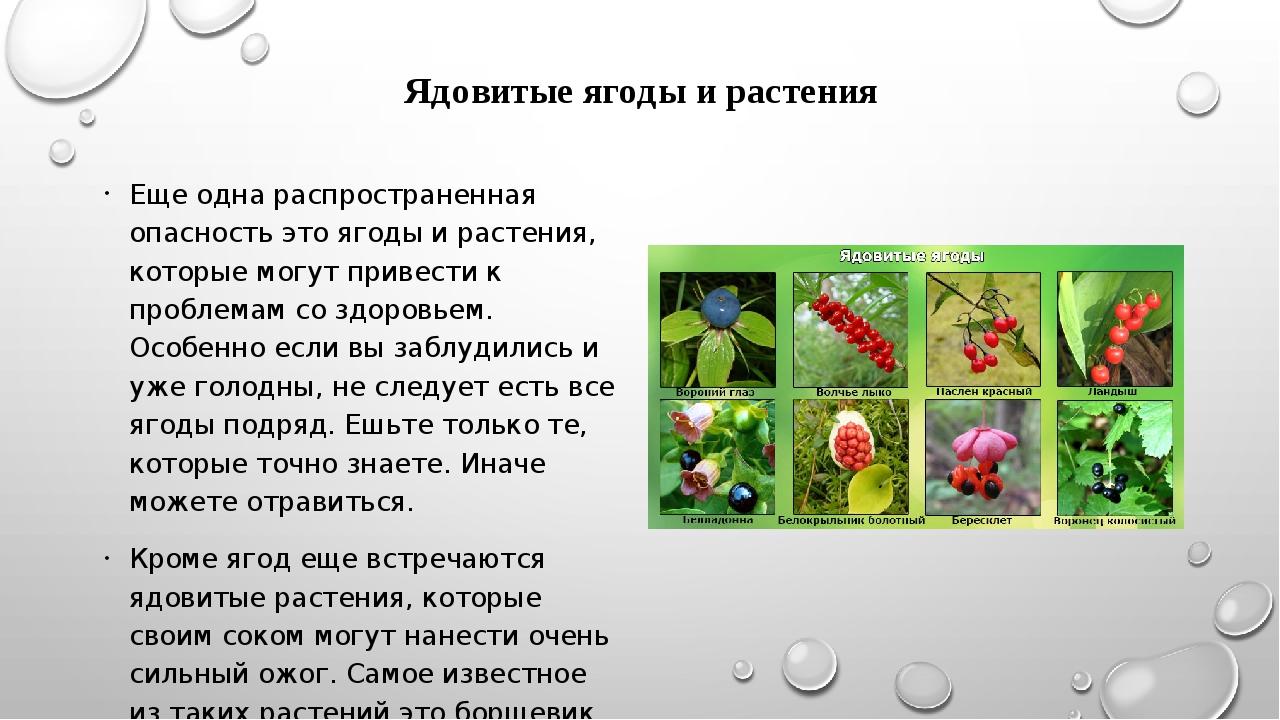 Ядовитые ягоды и растения Еще одна распространенная опасность это ягоды и рас...
