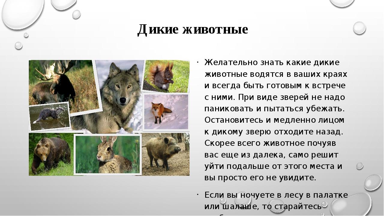 Дикие животные Желательно знать какие дикие животные водятся в ваших краях и...