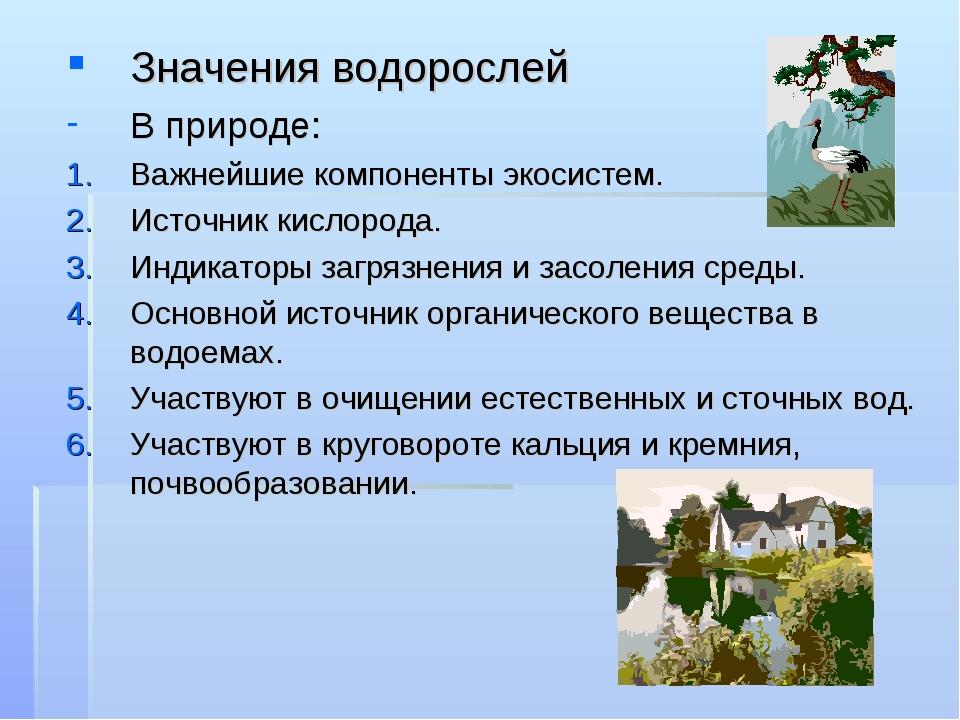 значения водорослей картинка нужная, работа важная
