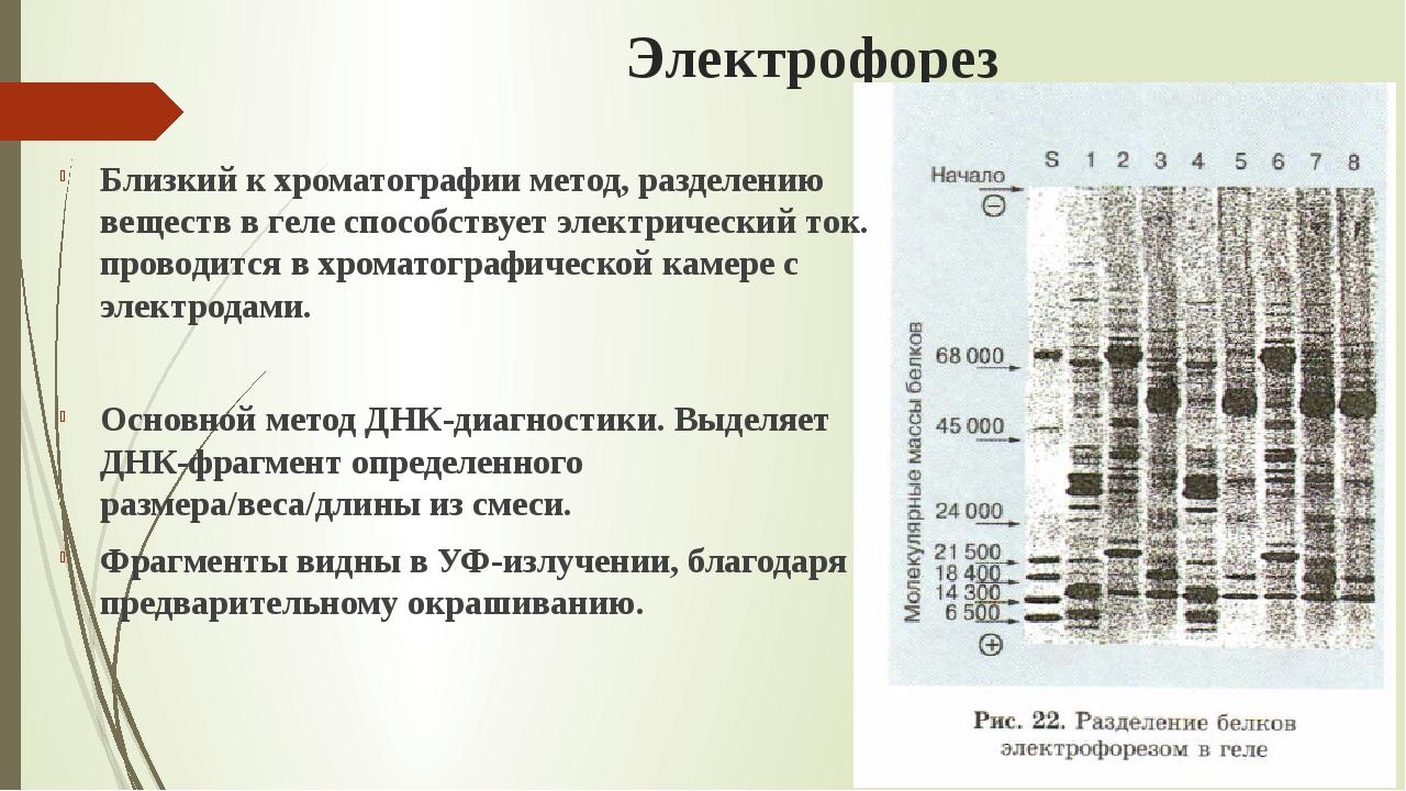 Электрофорез Близкий к хроматографии метод, разделению веществ в геле способс...