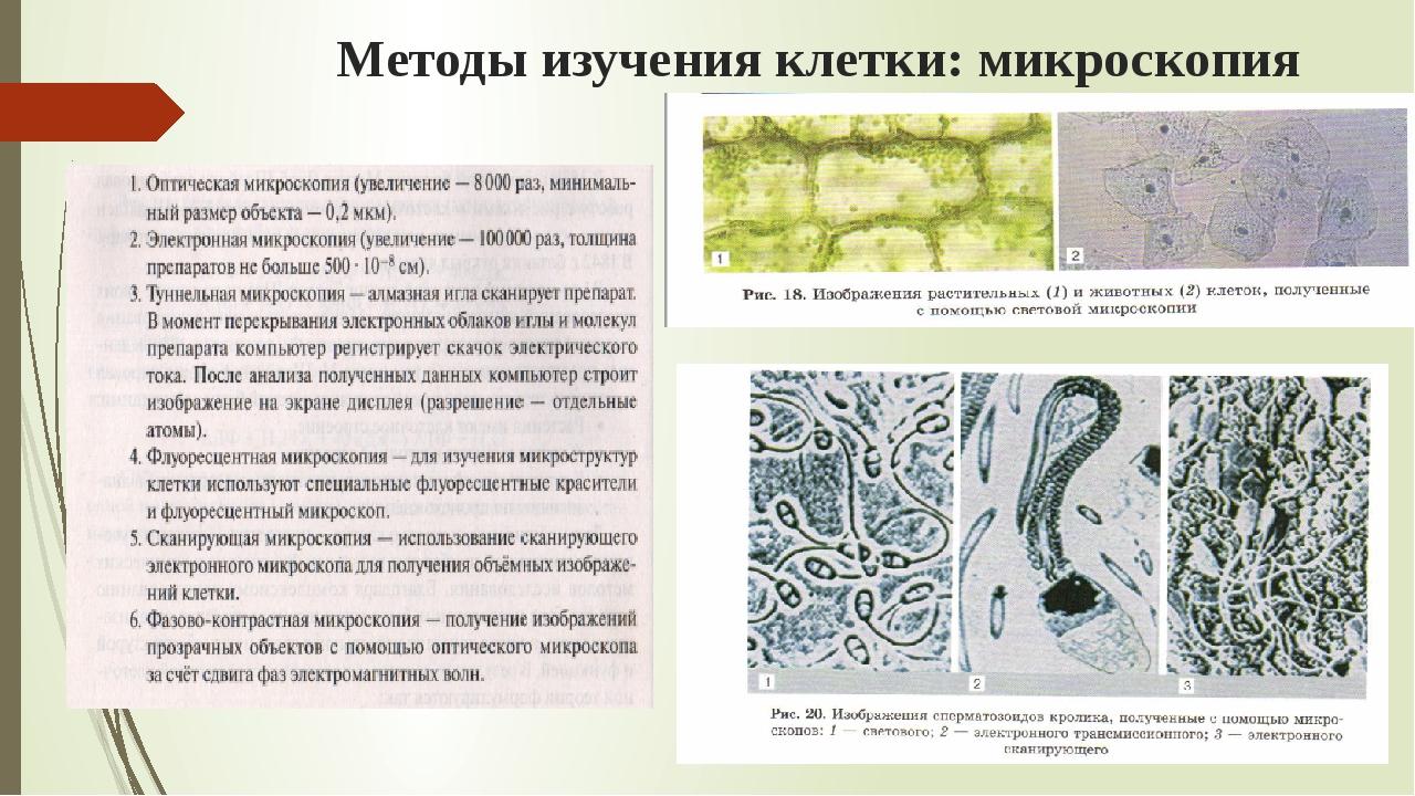 Методы изучения клетки: микроскопия