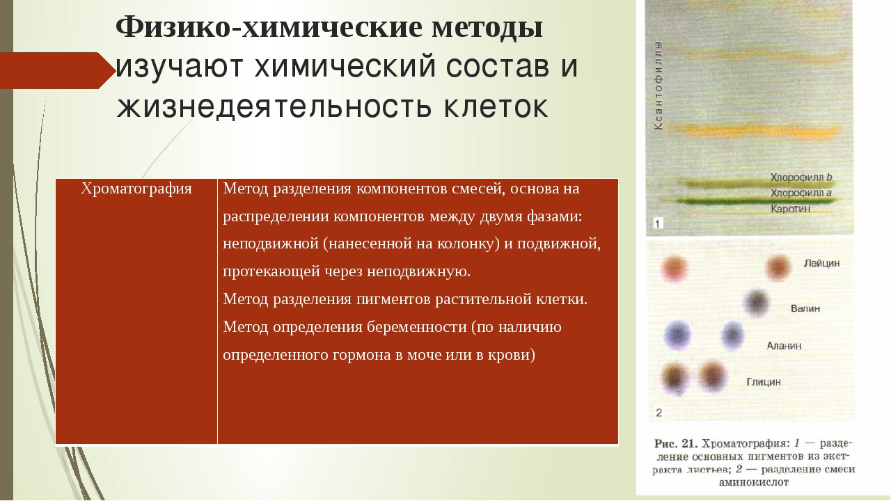 Физико-химические методы изучают химический состав и жизнедеятельность клеток...