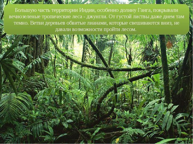 20 карточек в коллекции «Красивые леса Индии» пользователя Татьяна ... | 480x640