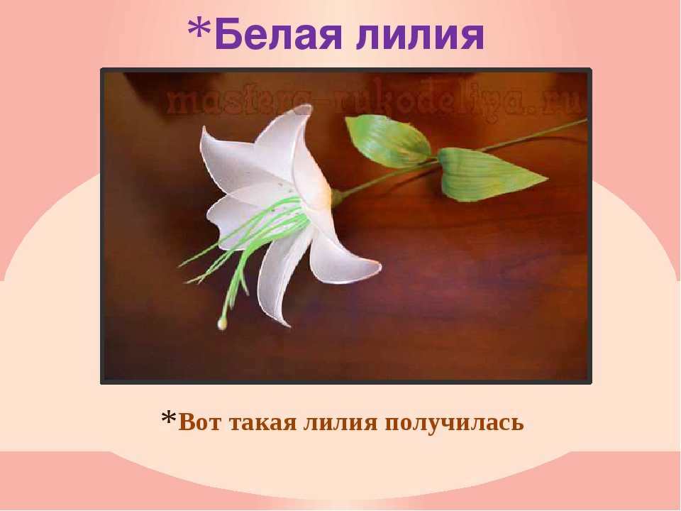 Белая лилия Вот такая лилия получилась