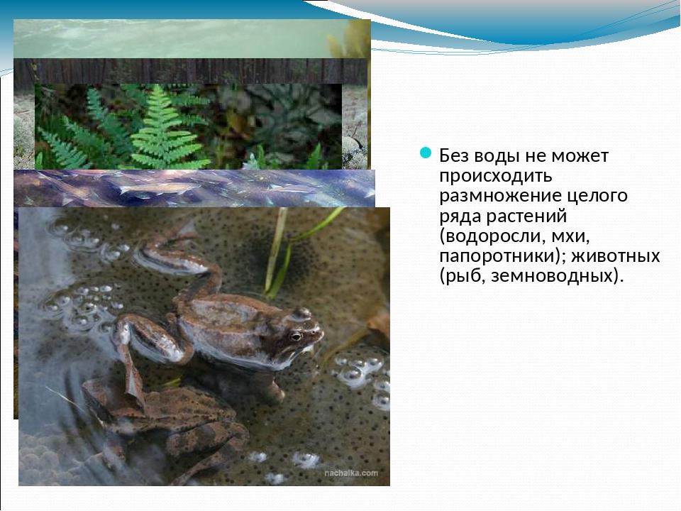 Без воды не может происходить размножение целого ряда растений (водоросли, мх...