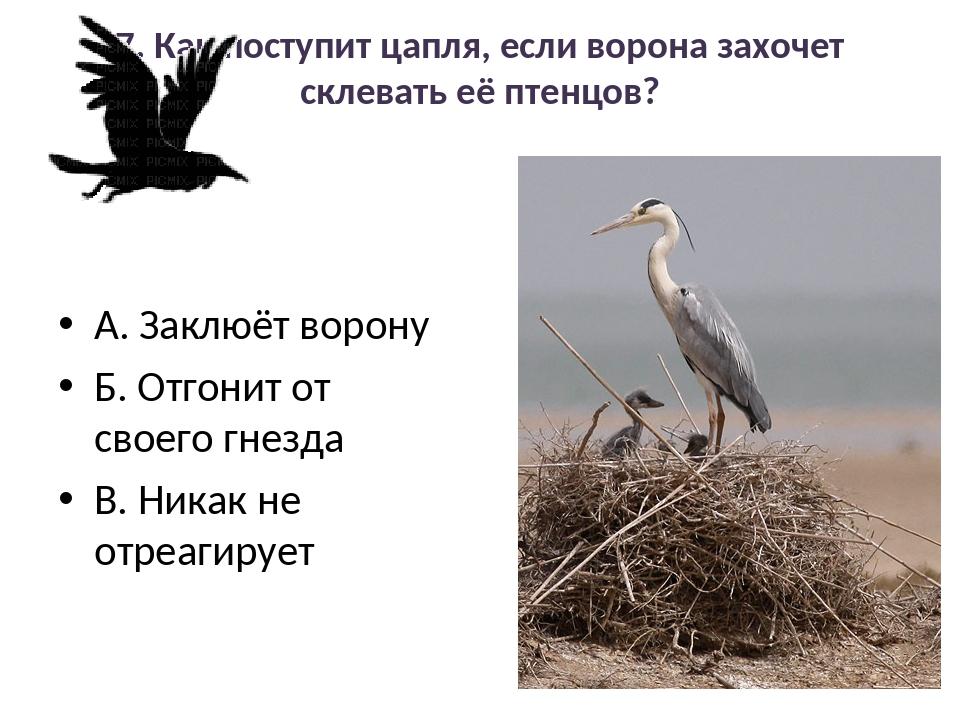 7. Как поступит цапля, если ворона захочет склевать её птенцов? А. Заклюёт во...