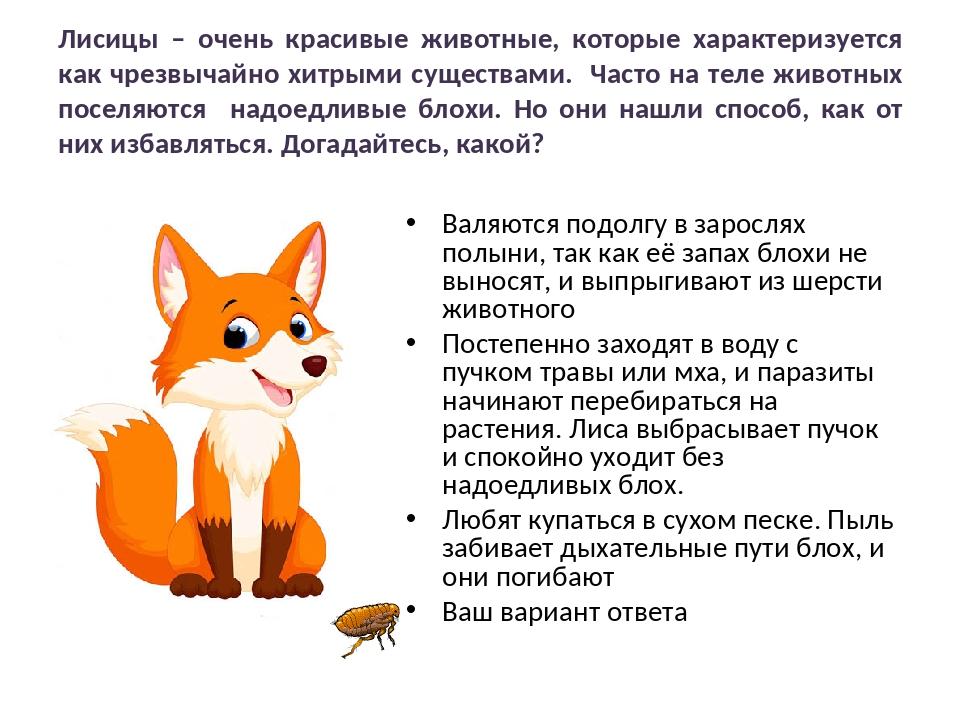 Лисицы – очень красивые животные, которые характеризуется как чрезвычайно хит...
