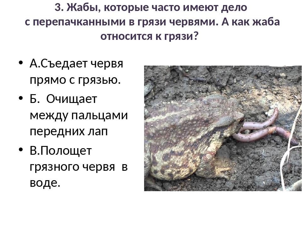 3. Жабы, которые часто имеют дело с перепачканными в грязи червями. А как жаб...