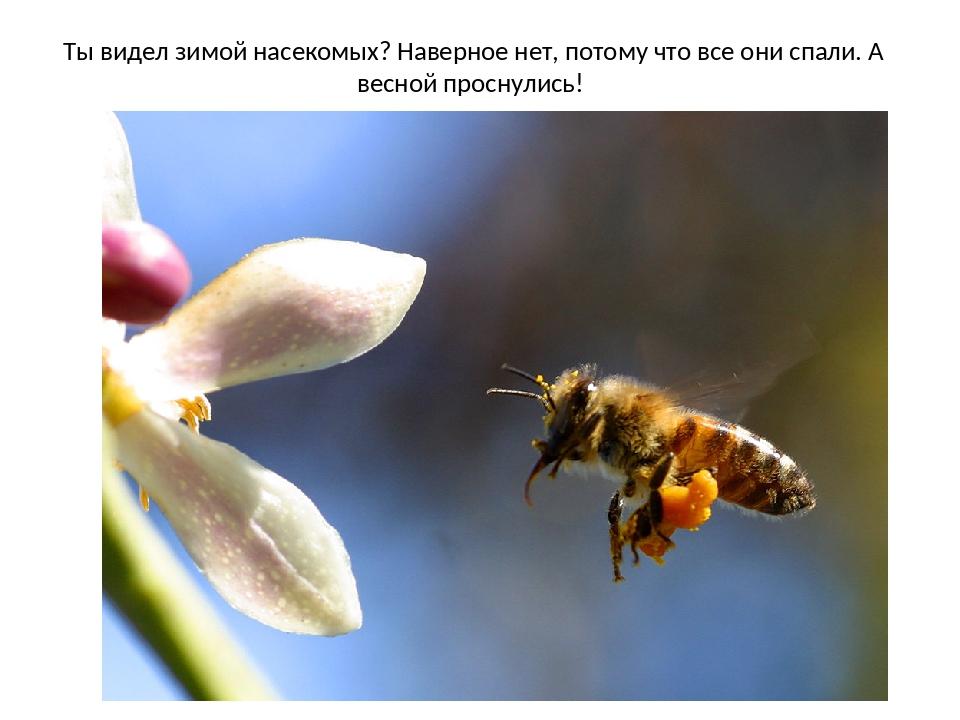 Ты видел зимой насекомых? Наверное нет, потому что все они спали. А весной пр...