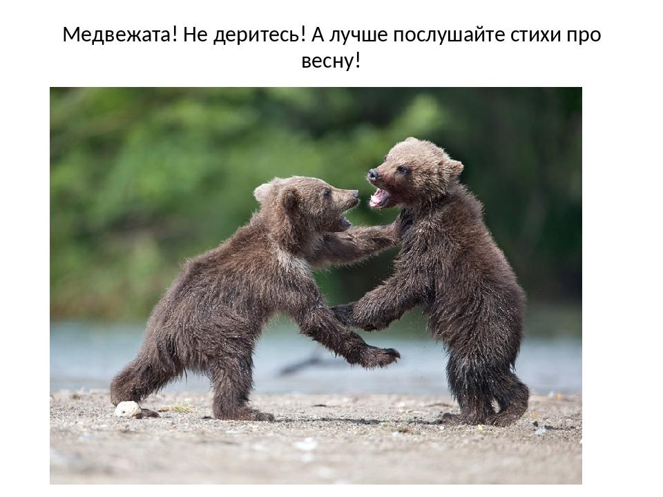 Медвежата! Не деритесь! А лучше послушайте стихи про весну!