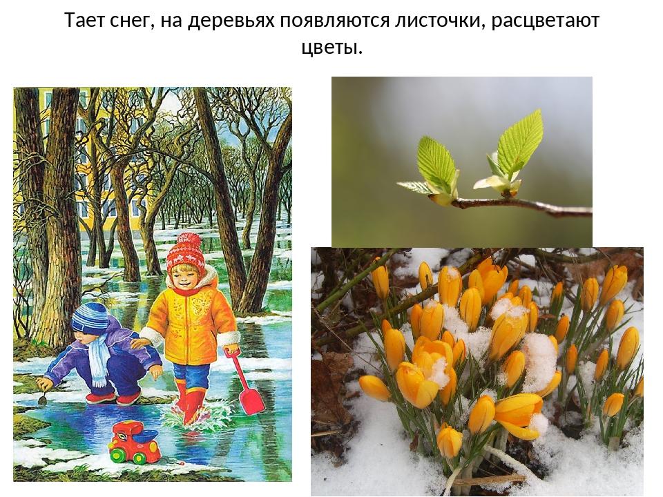 Тает снег, на деревьях появляются листочки, расцветают цветы.