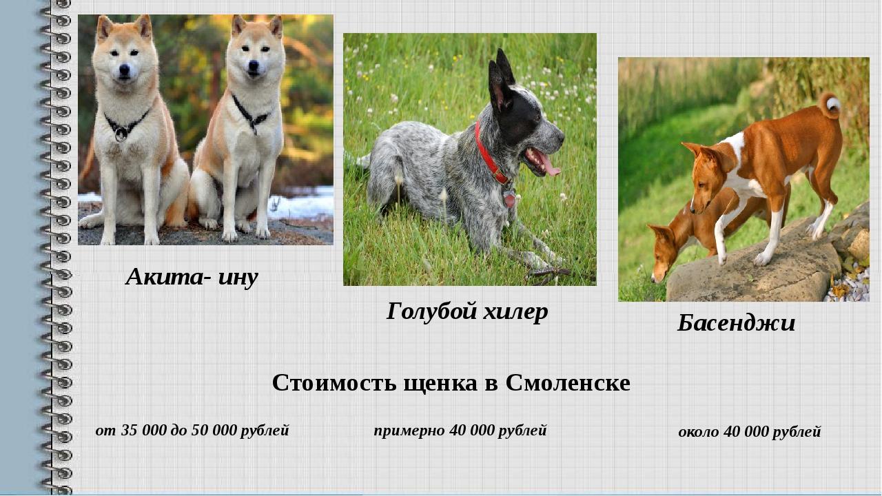 Акита- ину Голубой хилер Басенджи около 40000 рублей Стоимость щенка в Смоле...