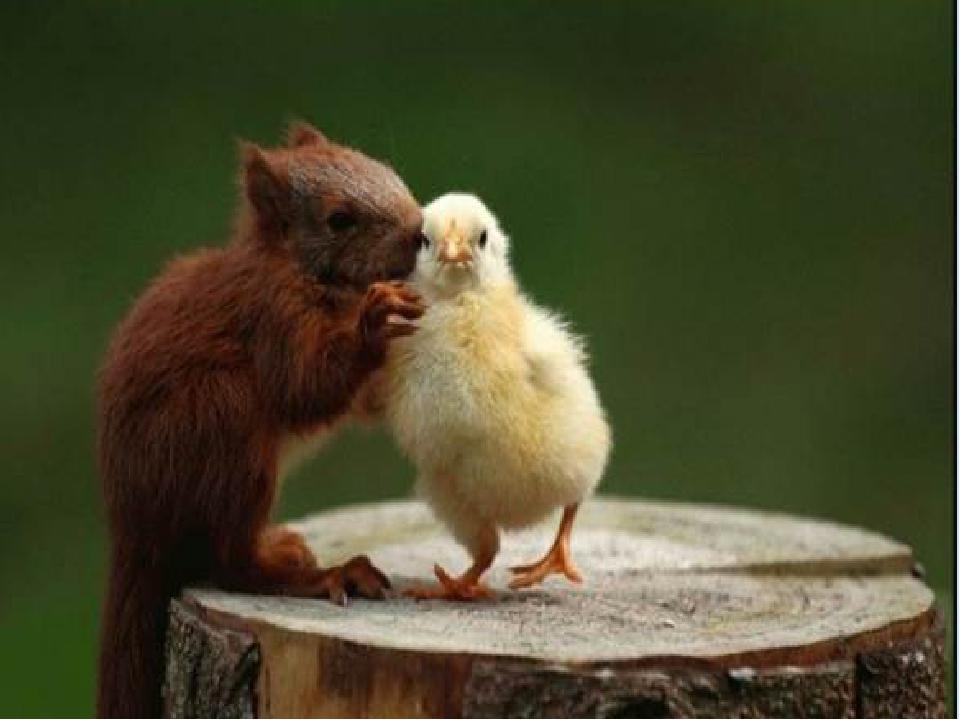 Необычная дружба. http://goldina-myclas.ucoz.ru/.