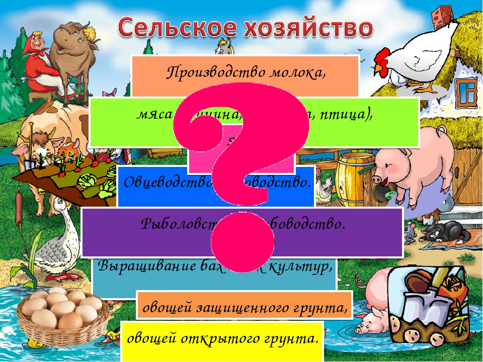 Производство молока, мяса (свинина, говядина, птица), Овцеводство, козоводств...