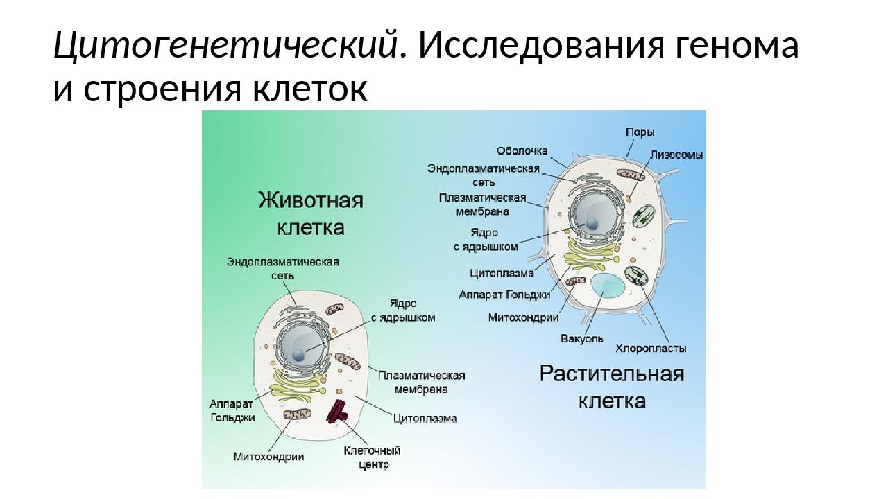 Цитогенетический. Исследования генома и строения клеток