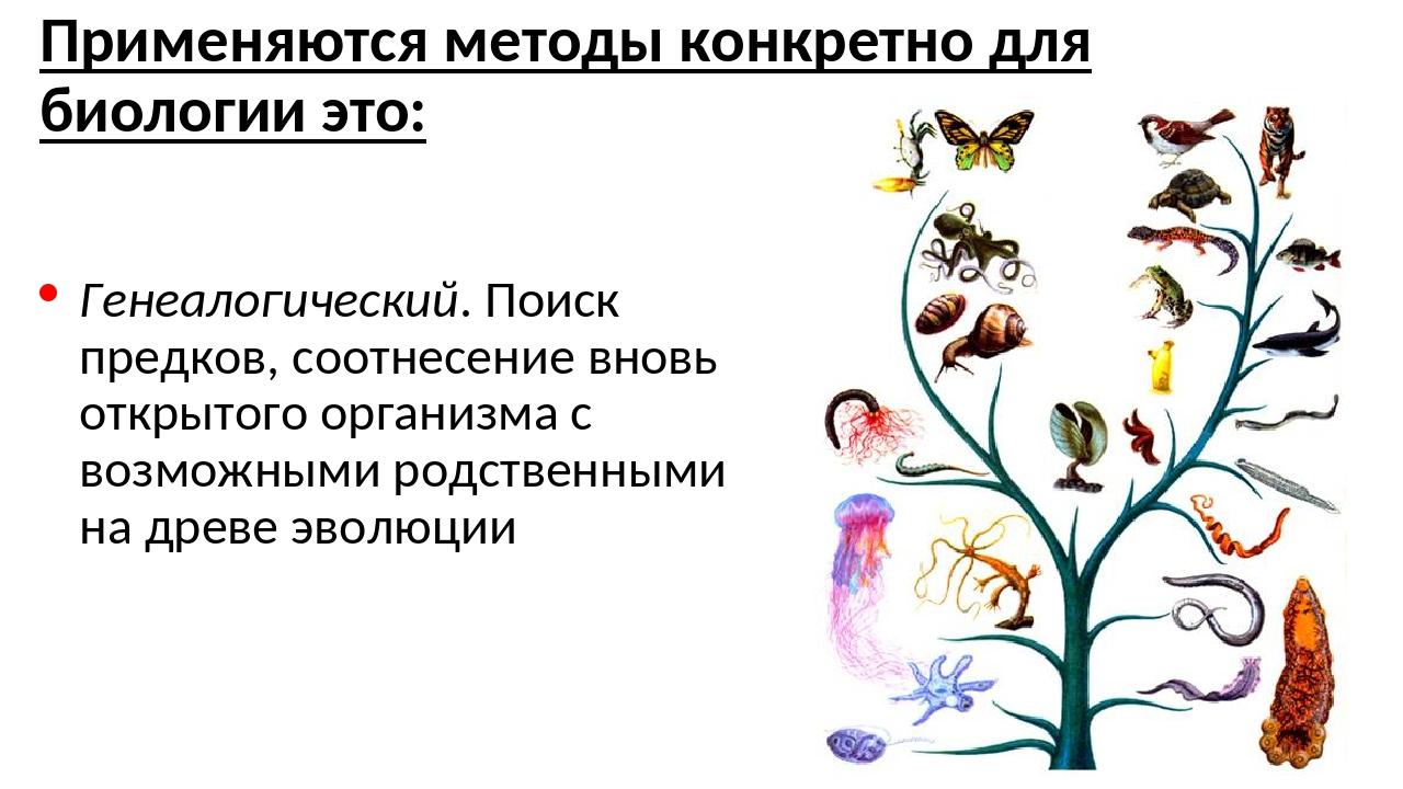 Применяются методы конкретно для биологии это: Генеалогический. Поиск предков...