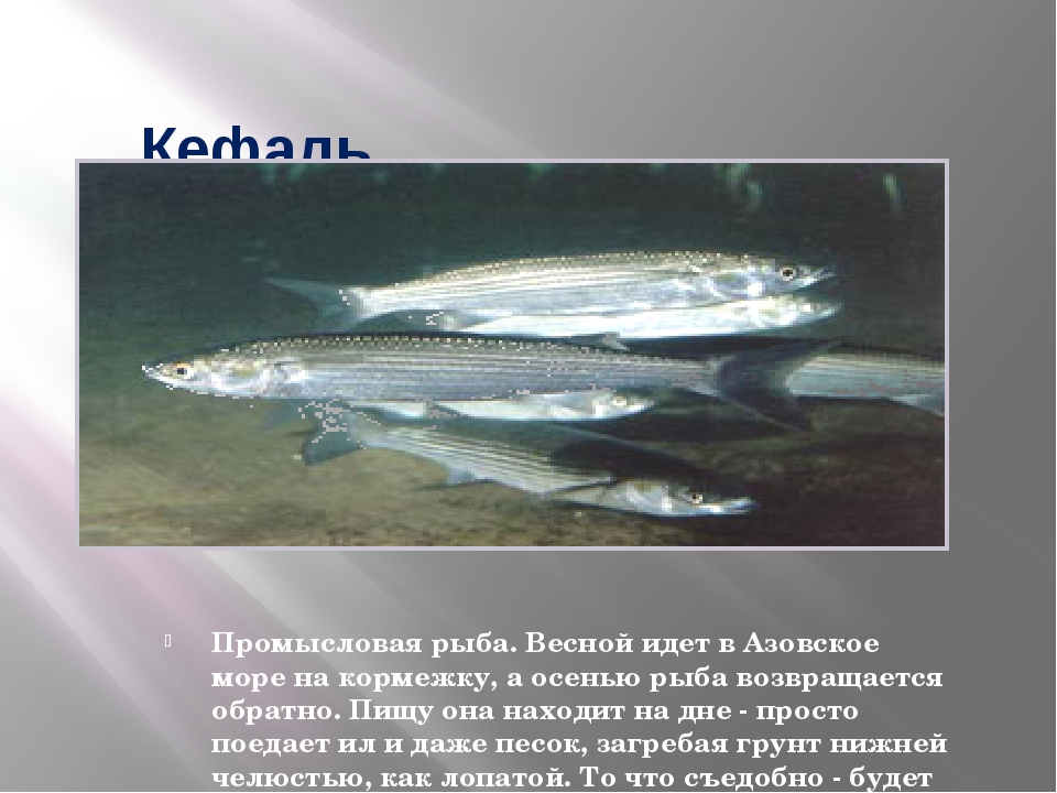 днем рождения рыбы азовского моря названия и фото развлечения придворных, императрица