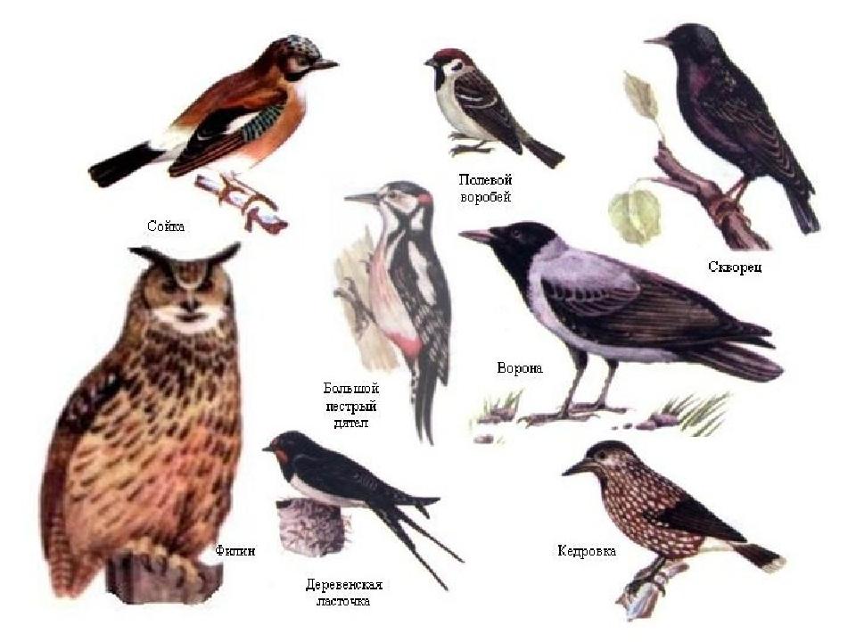 как найти название птицы по картинке того