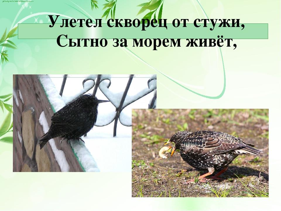 Ладонщиков скворец на чужбине картинки