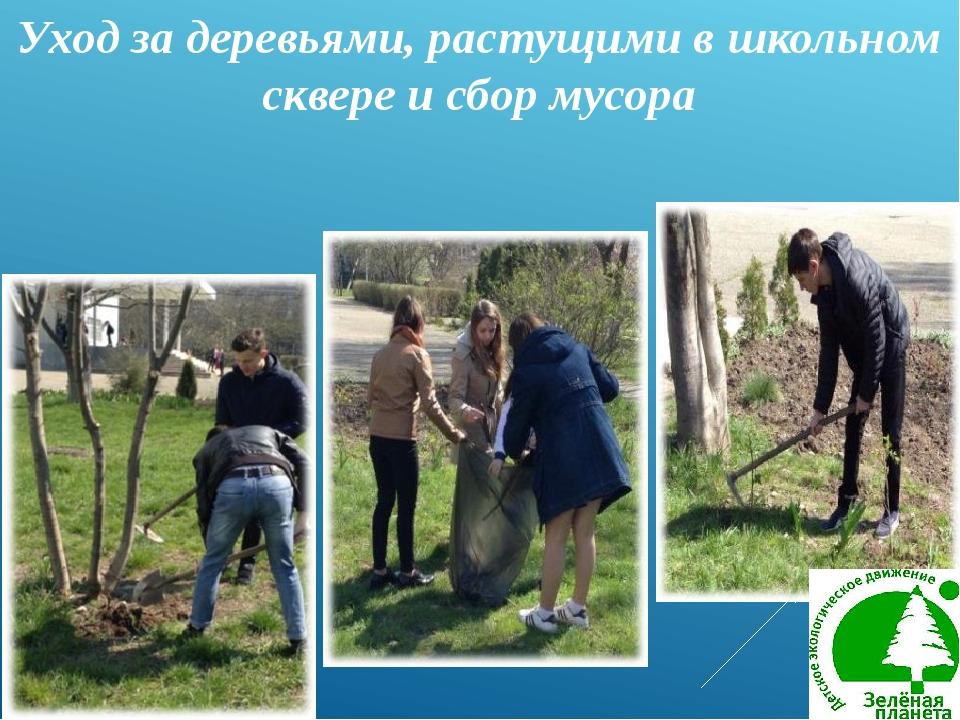 Уход за деревьями, растущими в школьном сквере и сбор мусора