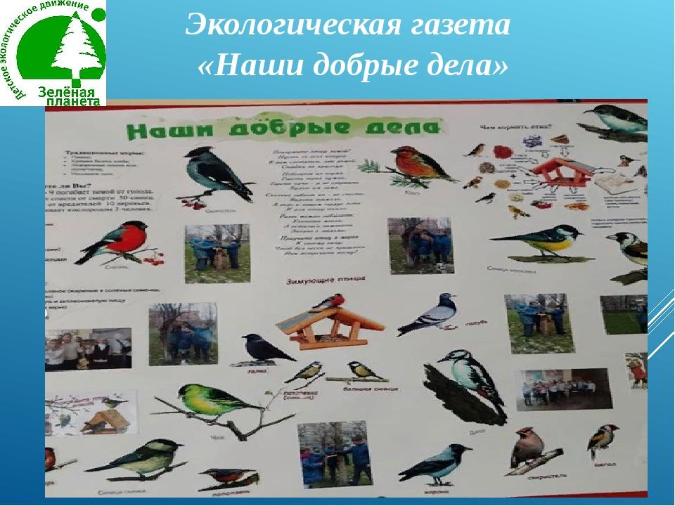 Экологическая газета «Наши добрые дела»