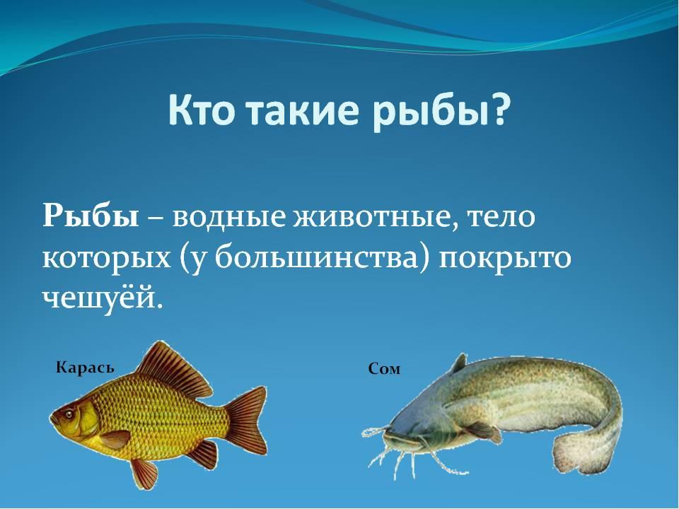 проект о рыбках в картинках всесторонне