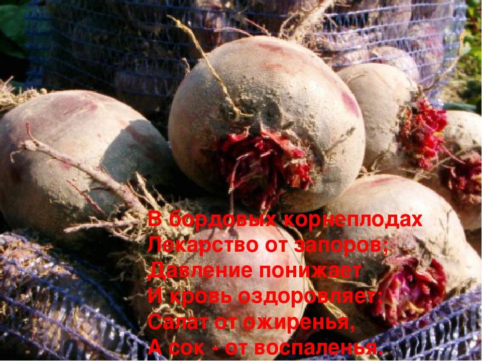 В бордовых корнеплодах Лекарство от запоров; Давление понижает И кровь оздоро...