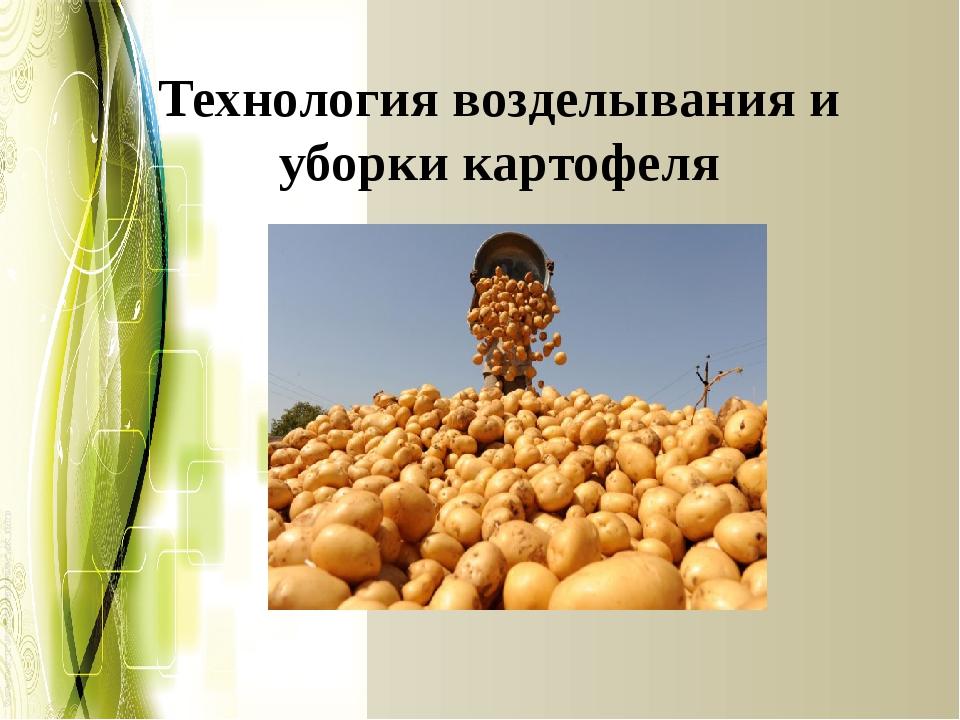 Технология возделывания и уборки картофеля