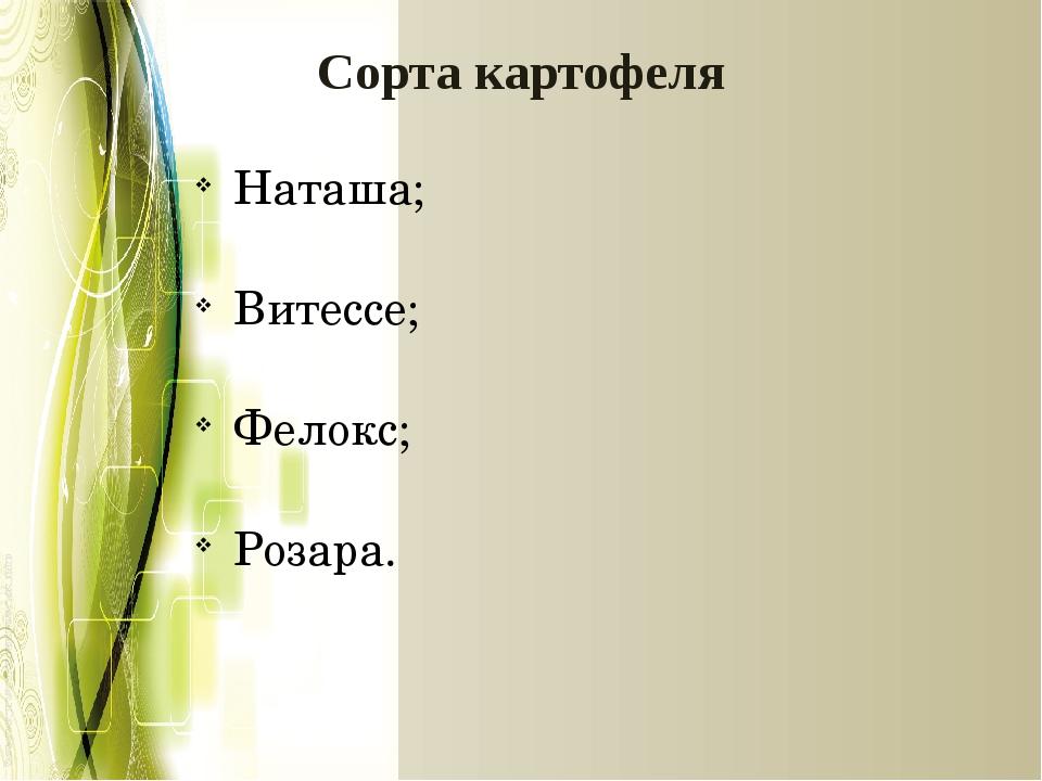 Сорта картофеля Наташа; Витессе; Фелокс; Розара.