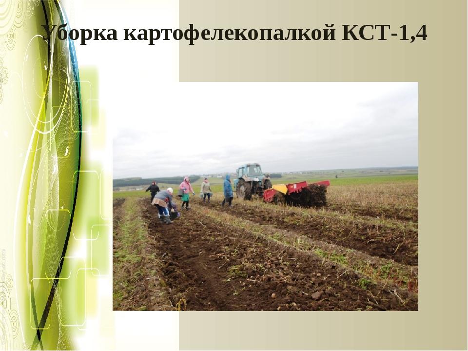 Уборка картофелекопалкой КСТ-1,4